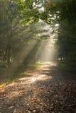 sunbeams пущи осени Стоковое Фото