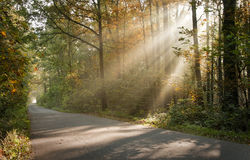 Sunbeams Royalty Free Stock Images