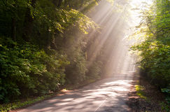 Sunbeams. Filters through forest leaves royalty free stock photography