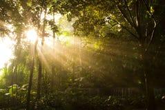 Sunbeams Imagem de Stock Royalty Free
