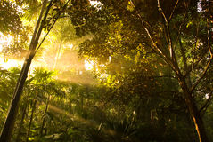 Sunbeams. Radiating through the gap in the branches and leaves of the trees in a dense vegetation stock image