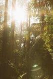 sunbeams Imagens de Stock Royalty Free