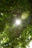 sunbeams Imagenes de archivo