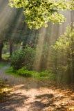 Sunbeams. Shining through the trees on a foggy autumn day Stock Photos