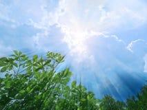 sunbeams Obrazy Royalty Free