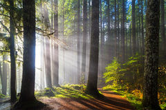 Sunbeams along Hiking Trails. Sunbeams at Lower Lewis River Falls Hiking Trails in Washington State stock photo