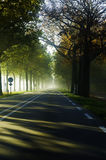 Sunbeams auf der Straße lizenzfreie stockfotografie