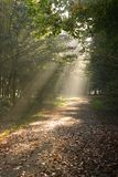 Sunbeams in autumn forest. Sunbeams are falling through the trees in autumn forest Stock Photo