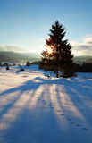 Sunbeams behind spruce tree in winter Alps Royalty Free Stock Image