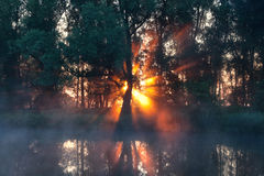 Sunbeams behind tree in misty morning Stock Photos