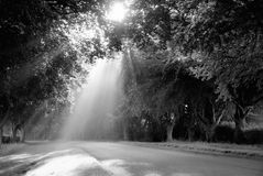 Sunbeams black and white. Stock Photography