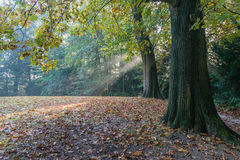 Sunbeams breaking through the foliage of the trees royalty free stock photography