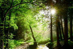 Sunbeams breaking through forest foliage. In Germany Royalty Free Stock Image