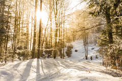 Sunbeams breaking through the icy trees on a winter trail. Wonderful warm light on a frosty day Stock Images