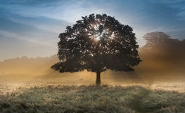 Sunbeams durch Baum auf nebelige Landschaft Stockbilder