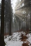 Sunbeams early in the forest. In winter Royalty Free Stock Photos