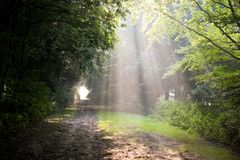 Sunbeams on early summer morning Royalty Free Stock Photo