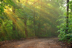 Sunbeams em uma estrada secundária fotografia de stock