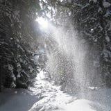 Sunbeams erleichtern fallenden Schnee stockfotos
