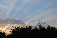 Sunbeams. The evening landscape, sunbeams is in blue sky Royalty Free Stock Image