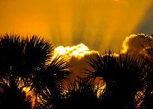 Sunbeams extend out of clouds during sunset in Ft. Pierce, Florida with silhouette of palm trees framing photo Royalty Free Stock Photos