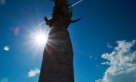 Sunbeams extend over sky and palm tree trunk with rainbow spots during midday Stock Image
