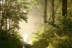 sunbeams för fjäder för skogmorgonbana Royaltyfria Foton