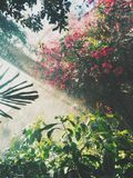 Sunbeams falling on foliage and flowers Royalty Free Stock Photography
