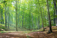 Sunbeams falling on the path in autumn forest Stock Photography