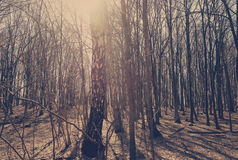 Sunbeams falling on the path in autumn forest. On a foggy morning Royalty Free Stock Images