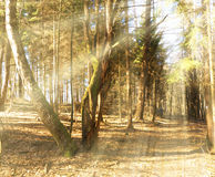 Sunbeams falling on the path in autumn forest. On a foggy morning Stock Photography