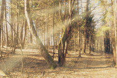 Sunbeams falling on the path in autumn forest. On a foggy morning Royalty Free Stock Image