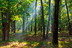 Sunbeams falling on the path in autumn forest on a foggy morning. Foggy landscape morning fog Stock Photo