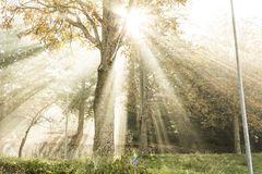 Sunbeams filter through the fog and the branches of the trees. In a fall morning stock photos