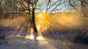 Sunbeams filtered through bare tree Stock Photo