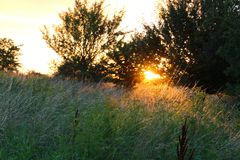 Sunbeams find some grass straw. In the sunset Stock Photos
