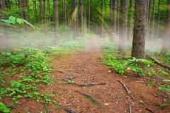 Sunbeams and fog on a path in the woods. Bozenkill Preserve stock photos