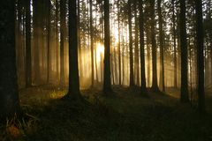 Sunbeams in the forest. Sundown in the forest Stock Photo
