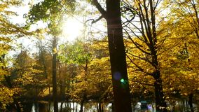 Sunbeams forest autumn. Sun and leaf autumn in the forest stock footage