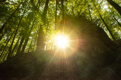 Sunbeams in a forest Stock Image