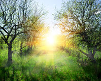 Sunbeams in the forest Royalty Free Stock Photos