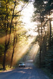 Sunbeams in the forest and car. Sunbeams in the forest and a car royalty free stock image