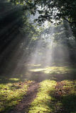 Sunbeams in Forest Glade royalty free stock photo