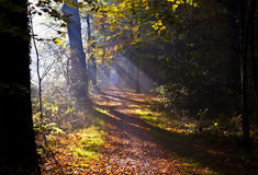Sunbeams on forest path Royalty Free Stock Photography