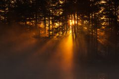 Sunbeams through the forest at sunrise Stock Image