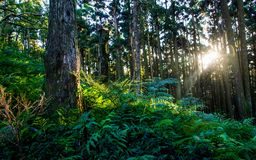 Sunbeams in forest Stock Photos