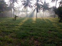 Sunbeams on green grassy-field in autumn morning royalty free stock photography