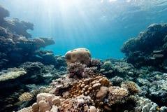 Sunbeams on hard coral. Sun beams filter down illuminating a small brain coral stock photo