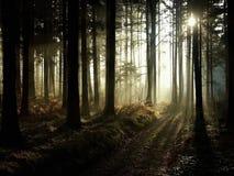 sunbeams i dimmig höstskog royaltyfri fotografi