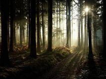 Sunbeams In Misty Autumn Forest Royalty Free Stock Photography